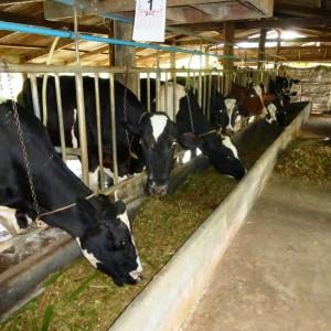auch Thailand hat Landwirtschaft